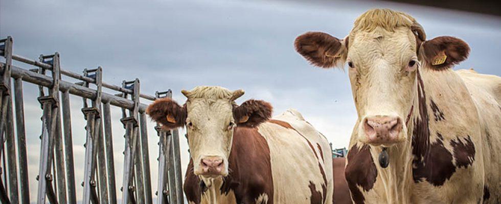 quelques photos de mon travail avec sept fermes de producteur